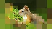 A funny puzzle game in which your goal is to guess the pixelated picture. You can try wild guesses, but much better way is to re-pixelate the picture […]