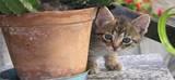REPIXEL FIND A CAT