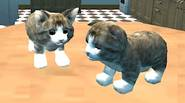 Cats are cute animals… but they also like to cause mess and destroy things… and this is the main goal of this awesome 3D game! As the cute […]